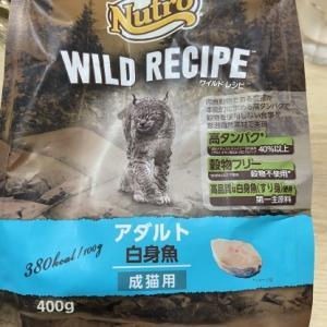 我が家で人気のネコご飯とネコおやつ