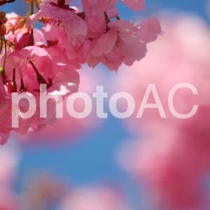 【写真AC】3月の結果(報酬) ダウンロード回数・掲載数
