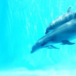 4月13日(月)四国水族館 グランドオープン(予定)水と生命の物語を巡る