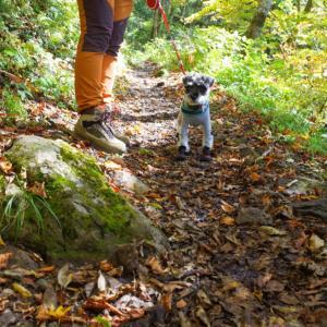 吾妻山で犬連れ紅葉狩りトレッキング
