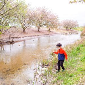 また桜を見に、今度はお散歩だけ@百間川せせらぎ広場(岡山市中区)