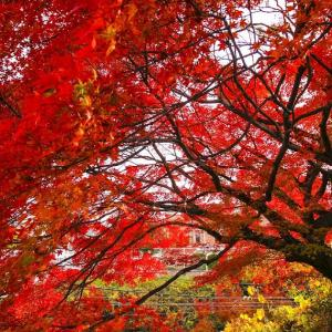 懐かしのディレクターカット集 ④ 2014年12月 紅葉と雨の真珠「とびだせ!えほん」