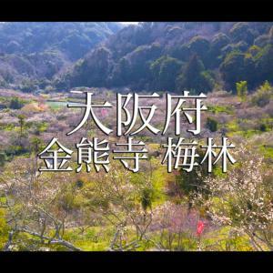 大阪府 金熊寺(梅の本数約2000! 泉南最大の梅林を見ることができる春におすすめの写真スポット. アクセス情報や交通手段・駐車場情報などまとめ)