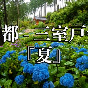 京都府 三室戸寺 (1万株のアジサイが咲き誇る京都随一の名所! 初夏、梅雨の時期におすすめの写真スポット! アクセスやライトアップ情報など)