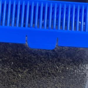 ヒーター「ピタリ適温プラス1号」による温度調整でコクワガタの蛹化を促進
