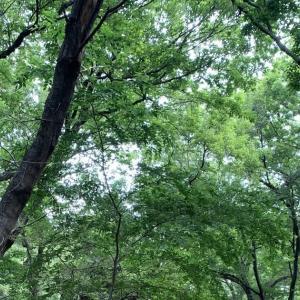 さいたま市北区でカブトムシ採集20200606