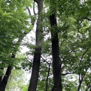 さいたま市桜区の採集ポイント探し20200607