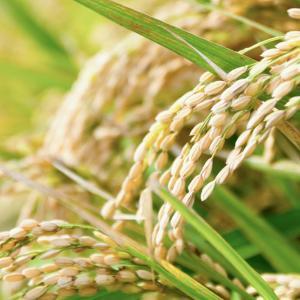 夫婦の和で日本国をつくり稲作を広めた
