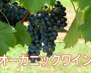 オーガニックワインの7つのメリット
