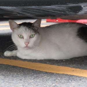 お散歩で出会ったシャイな猫