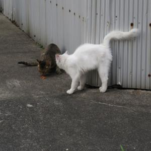 どこを狙う?猫もソーシャルディスタンス?
