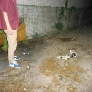 餌付けしていた外猫の妖気??