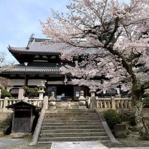 有馬温泉街の桜名所をお花見散策【神戸】