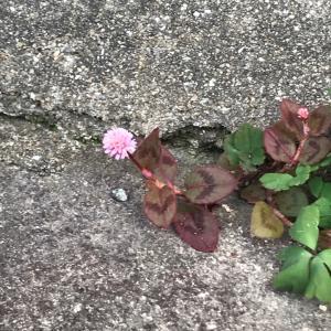 名前がない花