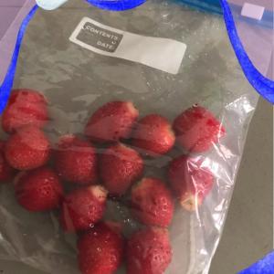 苺 イチゴ 一期