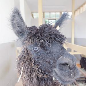 【岐阜県郡上】ひるがの高原「牧歌の里」で動物たちとふれあってきました!