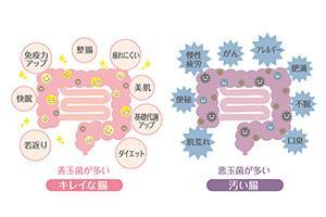 【免疫向上大作戦!!③】免疫強化の本丸は腸活【日本人の腸がヤバイ】
