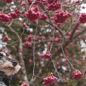 愛犬撮影は時に筋トレになるという話