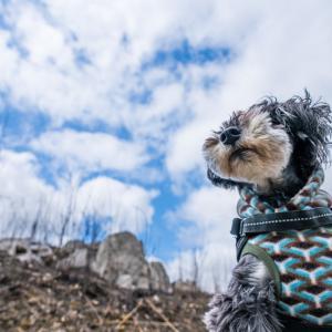 愛犬と山焼き後の秋吉台へ行ってきた