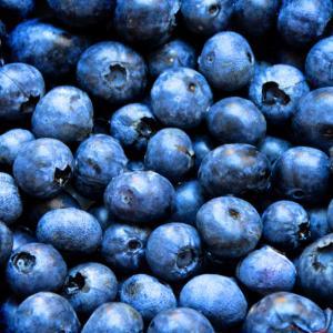 ベランダでブルーベリーを育てよう!①~苗の購入から鉢植えの方法を写真付きで説明