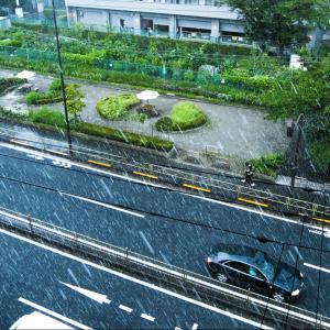 東京で雪 もう3月下旬だよね?