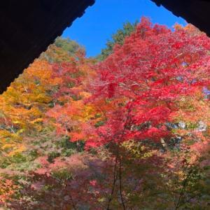 【京都・岩倉】美しすぎる紅葉♪実相院門跡、妙満寺