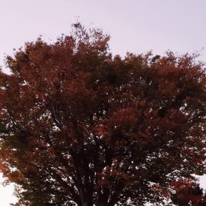 町田樹のスポーツアカデミア・第二回で紹介する「マスターピース」演技は何?