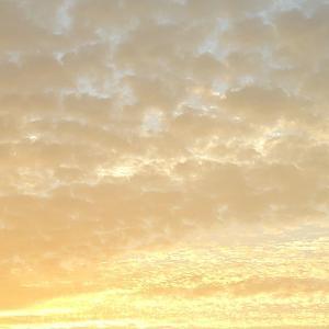 氷艶破沙羅・市川染五郎さんも出演された大河ドラマ「黄金の日日」