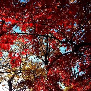 AutumnClassic2021・Part1