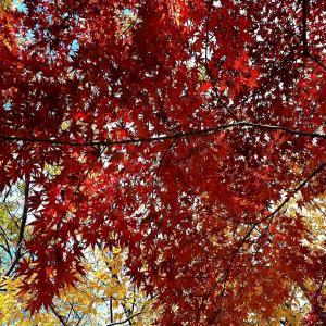 Autumn Classic International2021・Congratulations