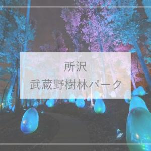 【埼玉観光】どんぐりが光る!?武蔵野樹林パーク チームラボの光の世界