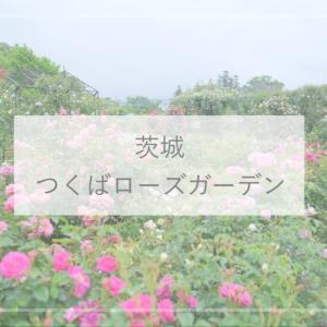 【茨城観光】700品種ものバラが咲き誇るつくばの『藤澤邸ローズガーデン(つくばローズガーデン)』