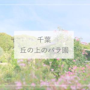【千葉観光】700品種のバラが咲き誇る『丘の上のバラ園』