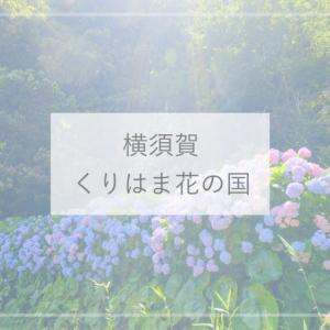 【横須賀観光】アジサイの道がきれい♪無料で入れる『くりはま花の国』