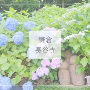 【鎌倉観光】アジサイ寺で有名!紫陽花が咲き誇る6月の『長谷寺』