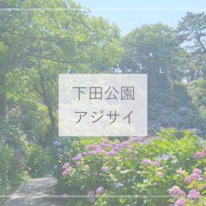 【静岡観光】300万輪が咲き誇る日本一のアジサイ群生が見れる!下田公園の伊豆下田あじさい祭り