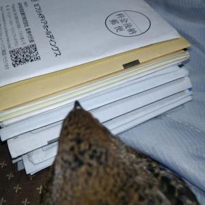 郵便ポストを開けて驚いたこと