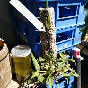 初めて育てる植物はワクワクする件