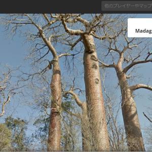 バオバブ王国のマダガスカルにバオバブの木を見に行ってきた!…気がする。