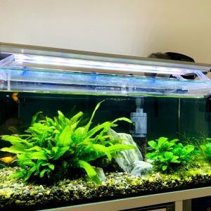 水槽の場所とお魚の世界