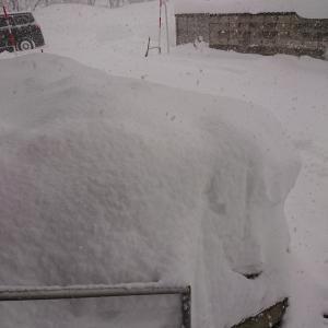 去年の分まで雪が降りました
