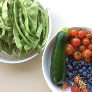 今日の収穫と手放した物