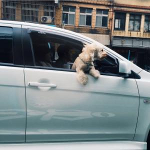 次女の運転免許取得へ向けて