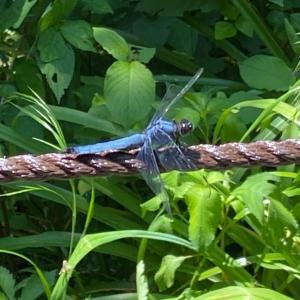 お散歩日記。見知らぬ人からの蝶々レクチャーが、本日のハイライト。