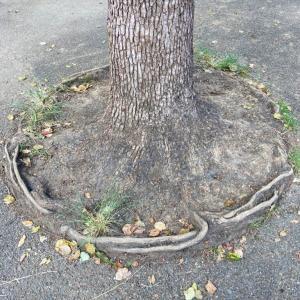 いろいろな視点で楽しむ木の根っこ。