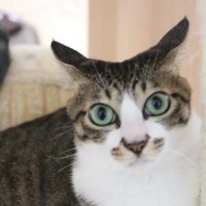 外から猫の喧嘩の声が!