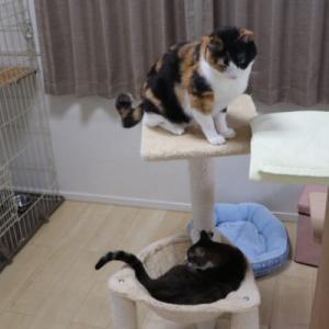 子猫用キャットタワーでは・・・やっぱり・・・(^-^;