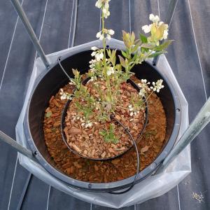 栽培スタイル:雑草対策のため防草シートを敷くハスクチップ