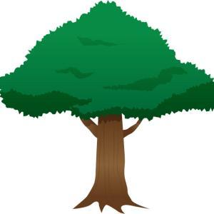 【悲報】自殺かリンチか、差別に怒るアメリカで木に吊るされた黒人の遺体発見が相次ぐ