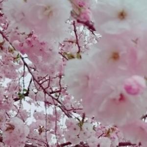 4/8の日記 懐かしむ春